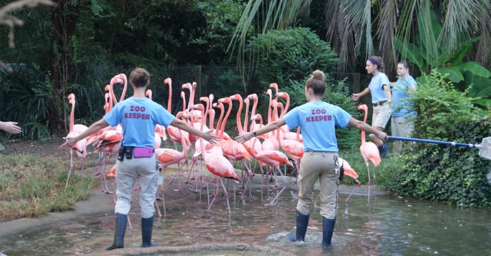 13.set.2018 - Flamingos são retirados para ficarem protegidos do furacão Florence no Zoológico Riverbanks, na Carolina do Sul.