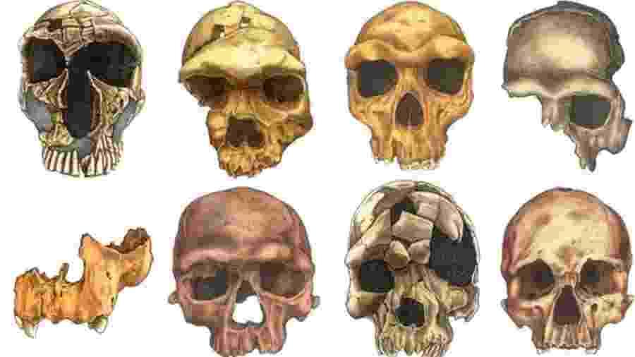 Humanos de hoje têm cabeça menor, sobrancelha mais cheia e rosto mais magro  - Rodrigo Lacruz/NYU College of Dentistry
