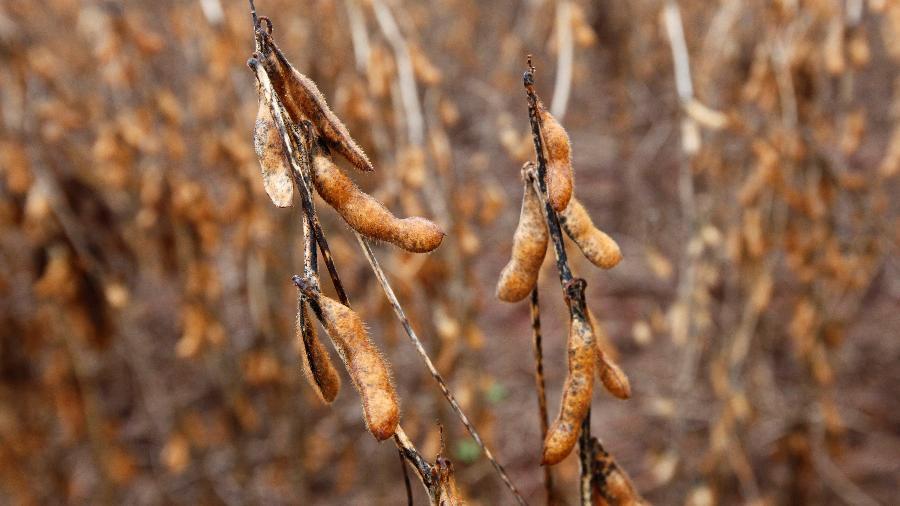 Entre janeiro e julho as exportações de soja subiram 36,3% em volume e 33,3% em faturamento em relação ao ano passado - Paulo Whitaker