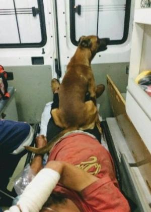 O cão acompanhou o resgate dos paramédicos, que o deixaram entrar na ambulância