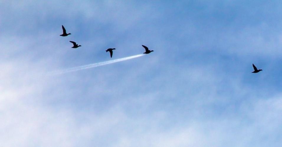 """Pato ou foguete? - O rastro deixado por um avião fez parecer o pato dessa revoada um foguete. A foto foi escolhida na categoria especial """"Ar"""" foi feita em Preston, no Reino Unido."""
