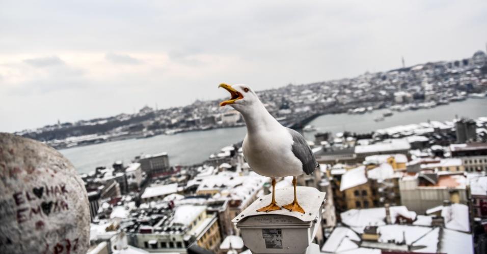 1º.mar.2018 - Uma gaivota grita na torre Galata no início da manhã perto de telhados cobertos de neve em Istambul, na Turquia