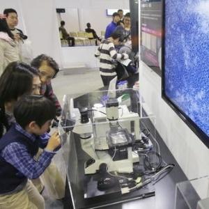 O experimento vai usar células-tronco pluripotentes induzidas (iPS), que podem se transformar em qualquer tipo de tecido, para gerar os órgãos humanos - Reprodução Nikkei