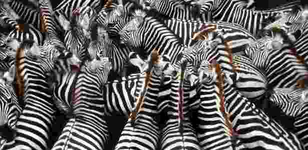 Frans Lanting/National Geographic Creative
