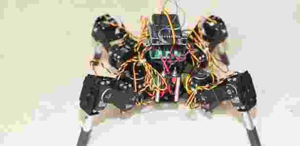 Para se desenvolverem, os mini cérebros precisam explorar o ambiente. Para isso, a equipe do brasileiro Alysson Muotri decidiu colocá-los em robôs - Muotri Lab/UC San Diego