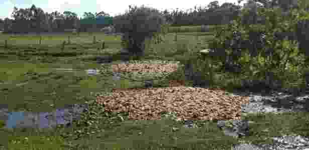 Lixão de cascas de maracujá - CNPq/Divulgação - CNPq/Divulgação