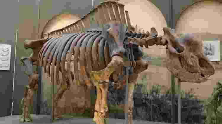 Esqueleto do mamífero no Museu de Stavropol - IGOR DORONIN - IGOR DORONIN