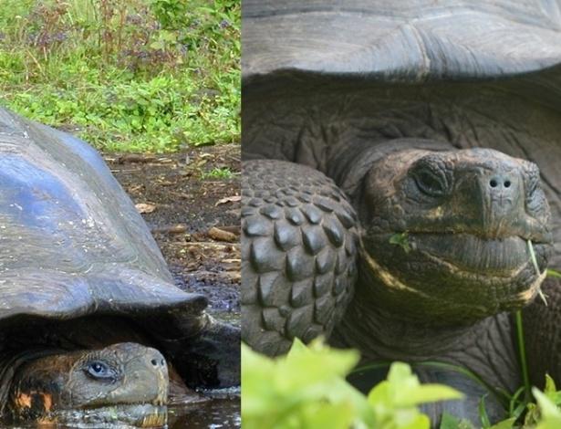 Descoberta nova espécie de tartaruga gigante nas ilhas Galápagos