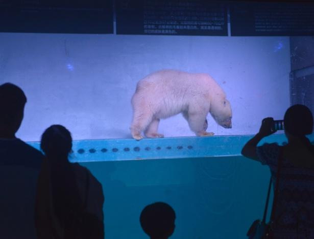 O urso polar Pizza vive no Shopping Grandview em Guangzhou, na China