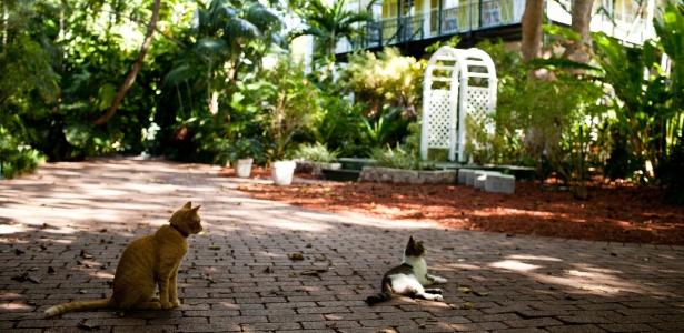 Gatos na Casa e Museu Ernest Hemingway em Key West, na Flórida