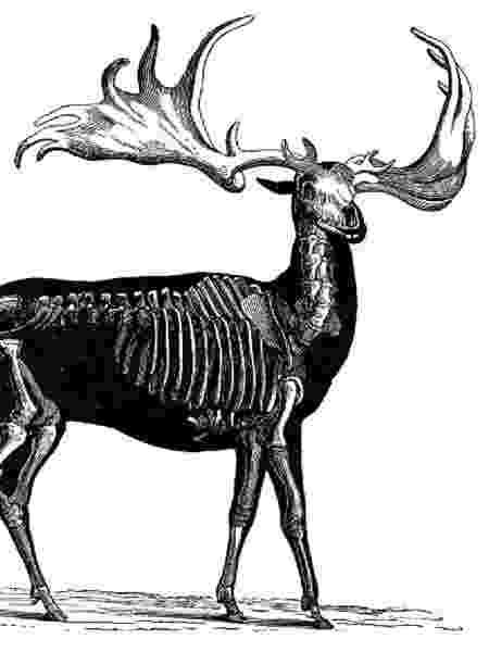 O animal extinto tinha cerca de dois metros de altura e presas que chegavam a 3,65m - Getty Images