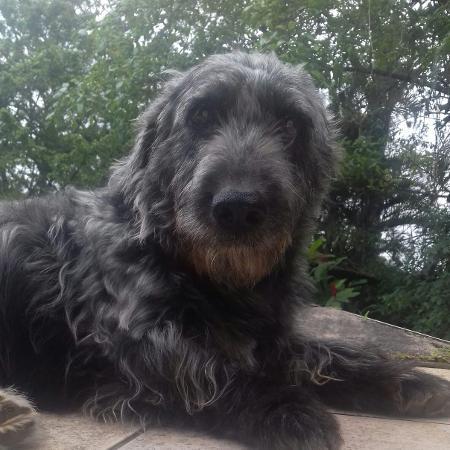 O cachorro Tufão, antes de ser picado pela jararaca - Arquivo pessoal