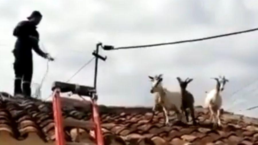 Não se sabe como os animais subiram no telhado - Reprodução/Youtube