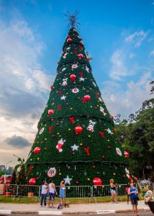 Árvore de 2015, que tinha um metro a menos de diâmetro na comparação com a deste ano