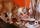 Esse café tem muito amor em forma de gatinhos e bebida quente - Radek Mica/AFP
