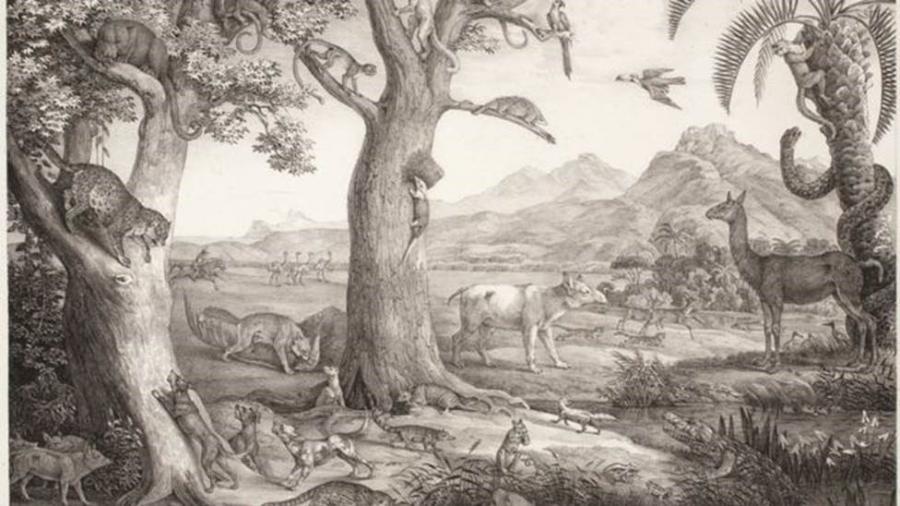 Alemão explorou e mapeou natureza brasileira no século 19, incluindo distrito destruído por lama em Mariana (MG) - Divulgação/Editora Capivara/BBC
