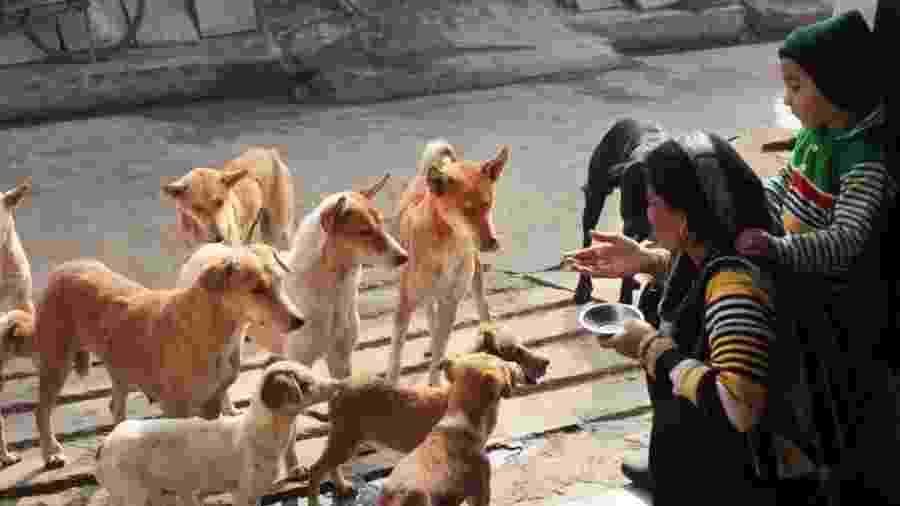 Alguns estudos já haviam mostrado que cães de estimação seguem gestos de humanos, mas será que o mesmo acontece com os que vivem nas ruas? - Getty Images