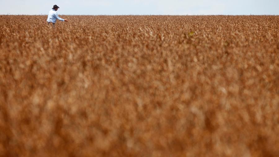 Agricultor em meio a plantio de soja em Tangará da Serra (MT) - Paulo Whitaker