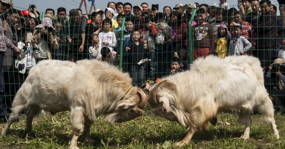 9.abr.2016 - Chineses assistem a rinha de bodes durante festival local na cidade de Nantong, no leste da China