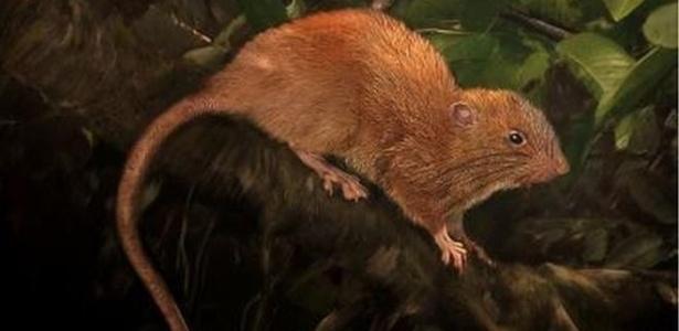 Representação da nova espécie descoberta nas Ilhas Salomão - Velizar Simeonovski/The Field Museum