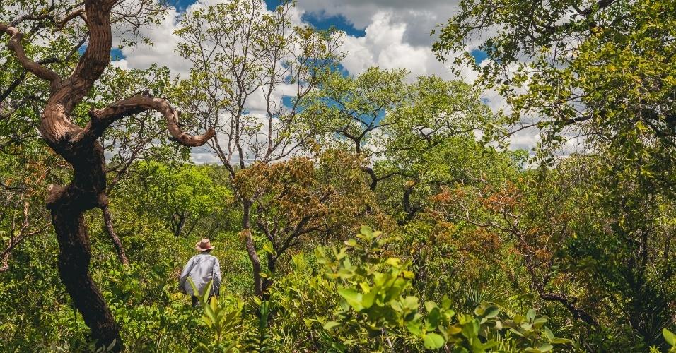 As comunidades se caracterizam pela coleta de frutos e remédios do cerrado no oeste da Bahia