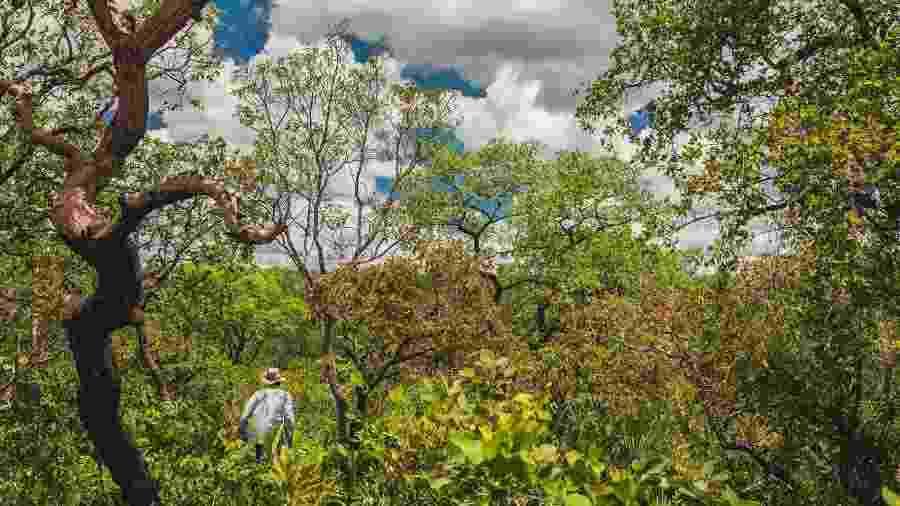 Área de cerrado no oeste da Bahia - Gui Gomes/Repórter Brasil