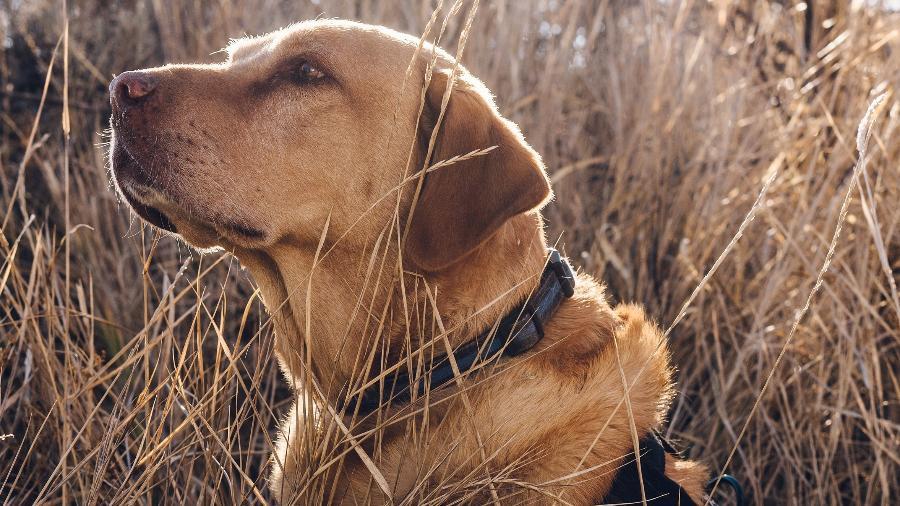 Tulo, um cão da polícia treinado para detectar drogas, em Rifle, Colorado - Ryan David Brown/The New York Times