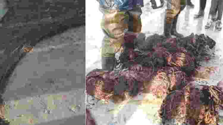 Redes de pesca e rolos de corda estavam entre os itens encontrados na baleia, que era um macho adulto, de acordo com especialistas - Dan Parry