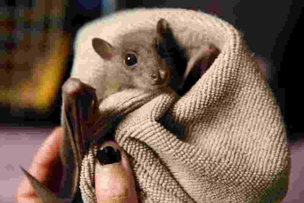 23.fev.2016 - Lifschitz conta que começou a carregar morcegos machucados para casa há cerca de dois anos - Baz Ratner/Reuters