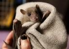 Tem gente que tem cinco cachorros, dez gatos... ela tem 70 morcegos - Baz Ratner/Reuters