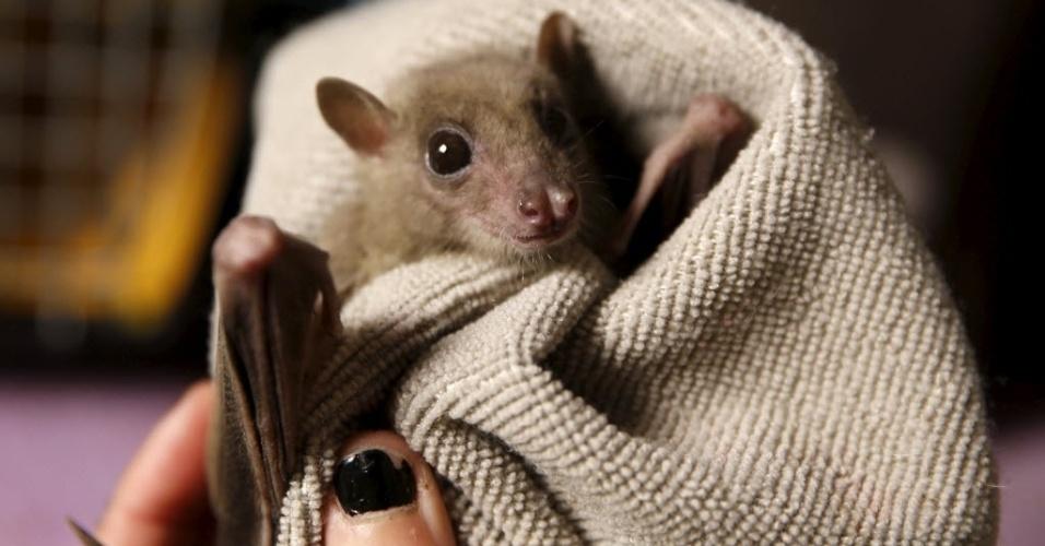 23.fev.2016 - Lifschitz conta que começou a carregar morcegos machucados para casa há cerca de dois anos