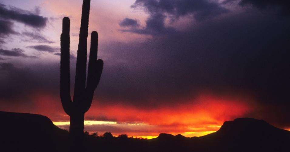 30.mar.2016 - Nuvens de uma tempestade passam por um cactus saguaro no Arizona, EUA. A espécie, nativa do deserto de Sonora, pode produzir até 25 galhos e chegar a mais de 20 metros de altura