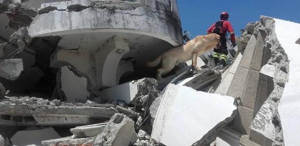 O labrador Dayko, que ajudava a resgatar vítimas em Pedernales - Reprodução/Facebook Cuerpo De Bomberos Ibarra Ibarra