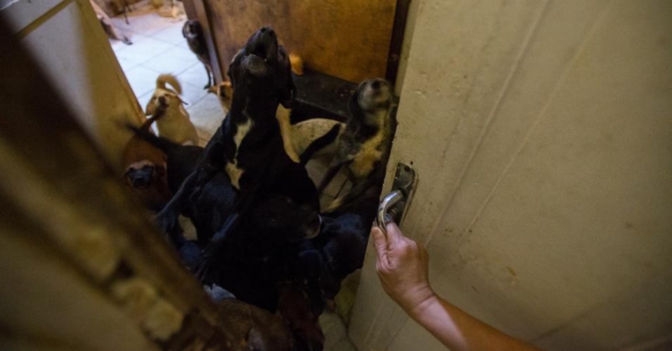 Em um dos quartos, uma multidão de cães é a parte mais barulhenta da pensão