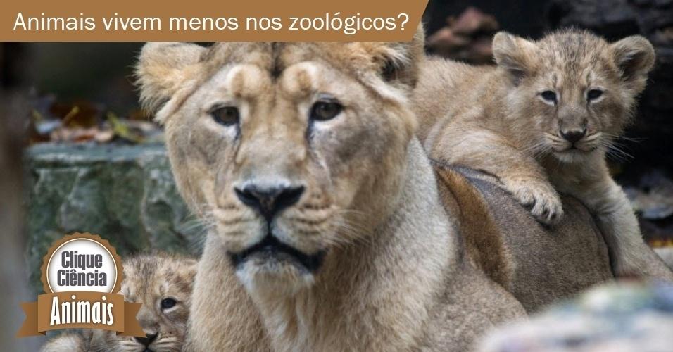 Clique Ciência: animais vivem menos nos zoológicos?