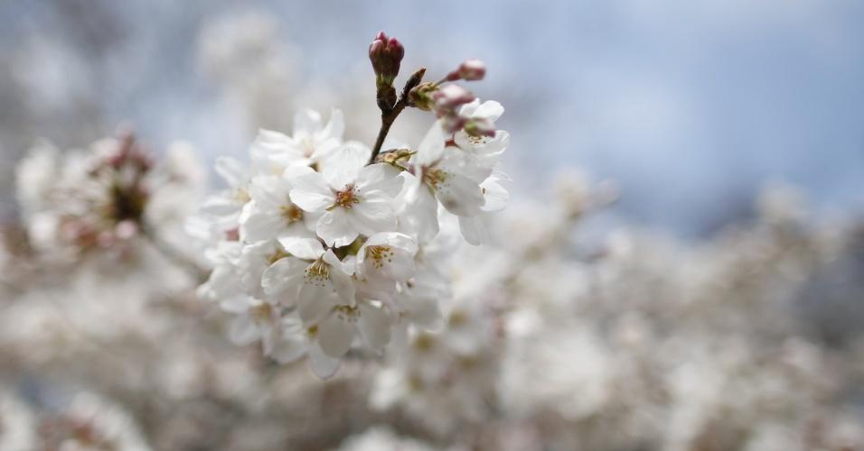 """18.abr.2016 - Flores de cerejeira florescem no parque Omiya, no norte de Tóquio (Japão), durante visita de um grupo engajado desestigmantização de quem sofre de demência. """"Eu quero dizer às pessoas que não subestimem suas habilidades. Há coisas que você não pode fazer mas há um monte que dá para fazer, então não se desespere"""", afirma"""
