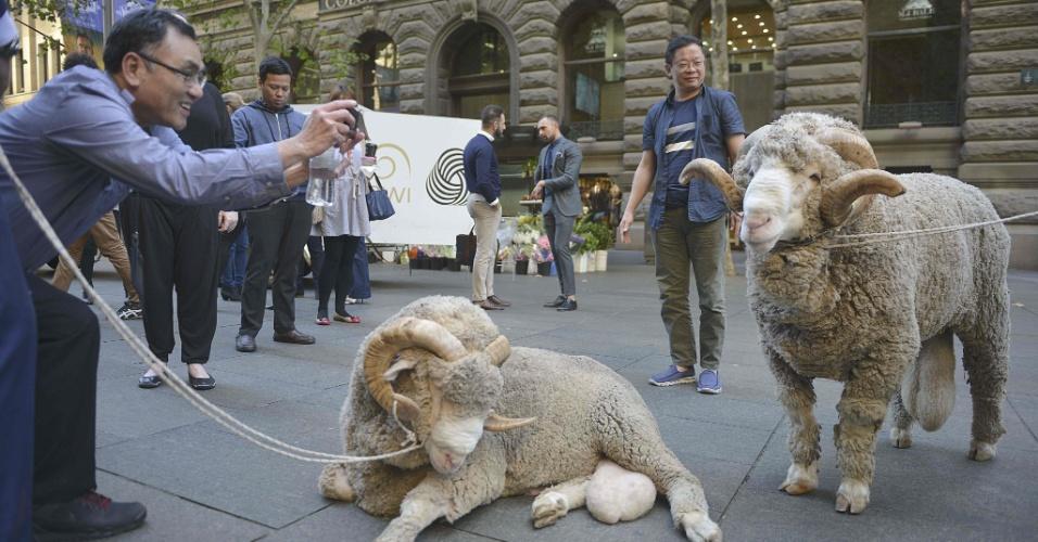 11.mai.2016 - Turista chinês fotografa carneiros levados para o centro financeiro de Sydney, na Asutrália, em ação de marketing de uma empresa especializada em pesquisa e desenvolvimento de tecnologia sustentável para produtores de lã