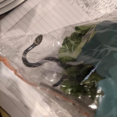 Filhote de cobra estava vivo e poderia picar ou ser engolido pelos humanos - Reprodução/Facebook/Lesley Kuhn