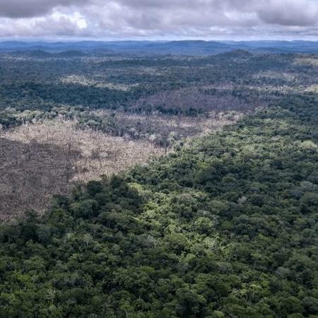 Desmatamento da Amazônia (em foto de julho de 2020 da ONG WWF) é um dos mais temidos gatilhos para novas pandemias no futuro - PA Media
