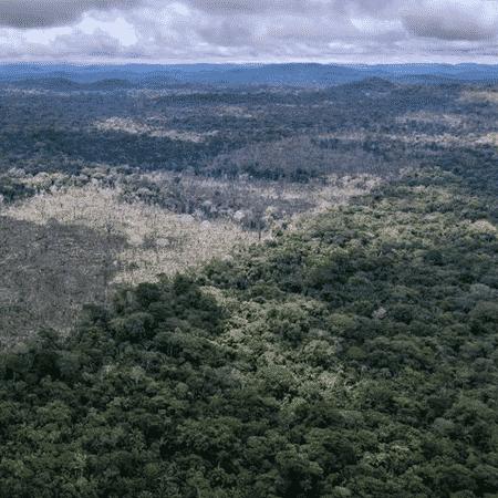 Atividades agropecuárias não são o principal responsável pelo desmatamento da Amazônia, afirmou o superintendente da PF no Amazonas - PA Media