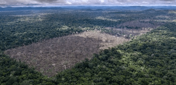 Meio ambiente | 94% do desmatamento na Amazônia brasileira é ilegal, aponta relatório