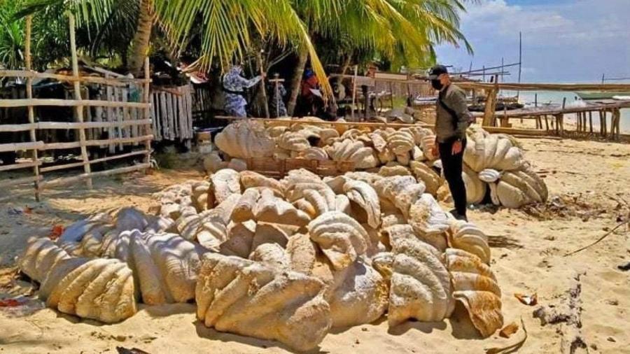 Conchas gigantes de moluscos que foram traficadas nas Filipinas  - Reprodução/Facebook/Guarda Costeira das Filipinas