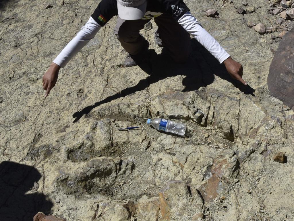 17.ago.2016 - Homem fica ao lado de pegada achada na Bolívia para mostrar como era enorme a pata do dinossauro terópode Abelissauro. De acordo com os pesquisadores, a pegada tem cerca de 1,20 metro