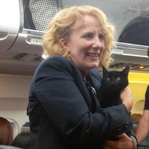 O gatinho não ofereceu resistência - Reprodução/Twitter/@KathThompson