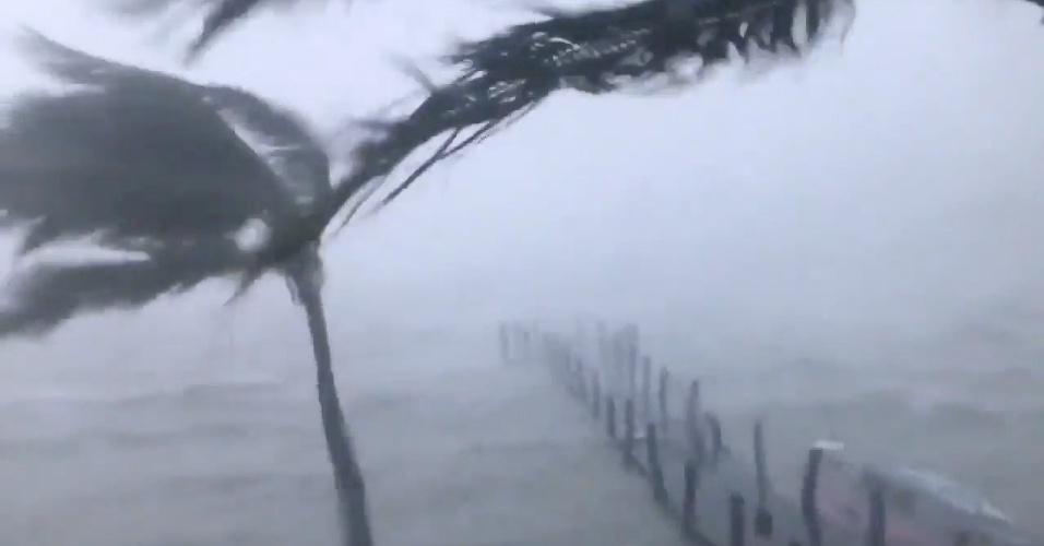 11.set.2017 - Folhas de palmeira são sacudidas pelos ventos do furacão Irma que atingiu Key West, na Flórida (EUA)