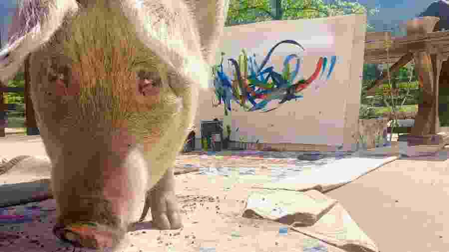 A porquinha Pigcasso já tem quadros vendidos no mundo inteiro - Divulgação