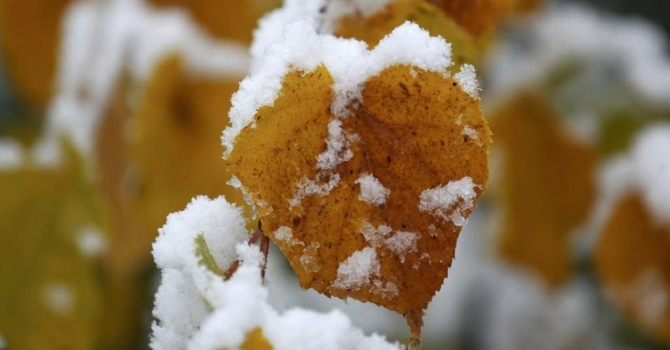 14.out.2015 - Neve cobre as folhas de árvores próximas à cidade de Soest, na Alemanha