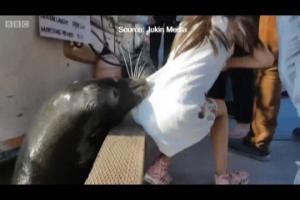 Leão-marinho causa pânico após puxar menina para dentro da água no Canadá (Foto: Reprodução)