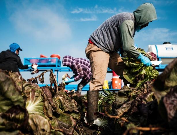 Pesquisas indicaram que os trabalhadores nascidos nos Estados Unidos provavelmente não se beneficiarão de um sossego de trabalho se os trabalhadores que estão nos Estados Unidos ilegalmente, especialmente os trabalhadores agrícolas, forem deportados - MAX WHITTAKER/NYT