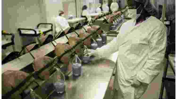 Os caranguejos-ferradura têm cerca de 30% de seu sangue colhido em testes biomédicos - Getty Images